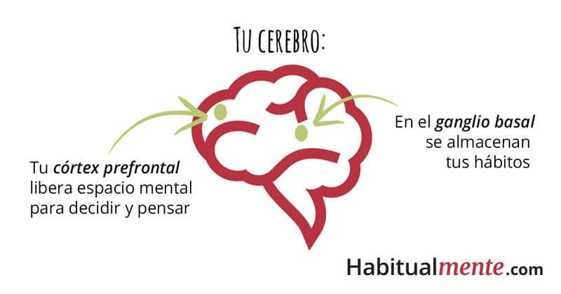 ¿Qué pasa en tu cerebro cuando se forman tus hábitos?