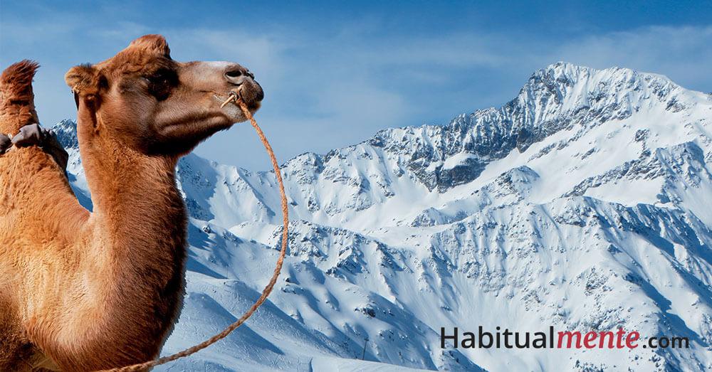 camello en la nieve autoestima baja