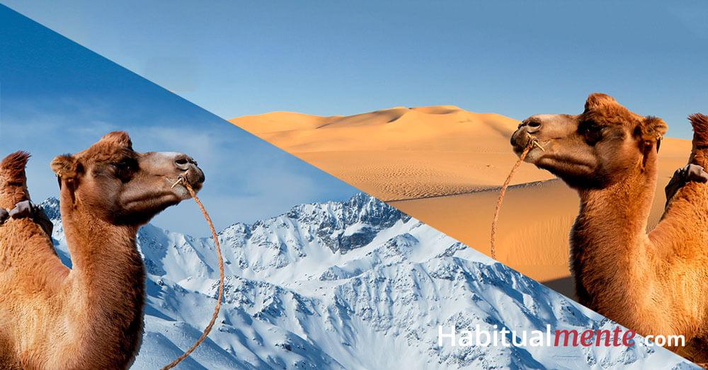 camello desierto y nieve baja autoestima